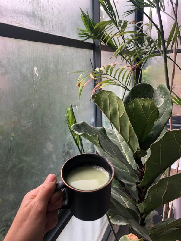 תה ירוק מאצ'ה עשיר בנוגדי חמצון